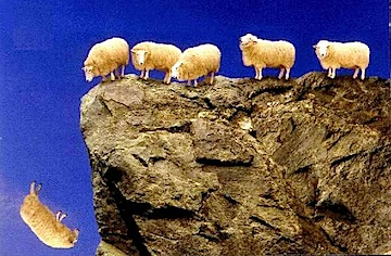sheep_off_cliff.jpg